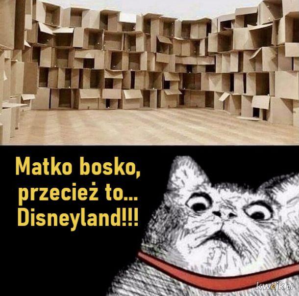 Koci Disneyland