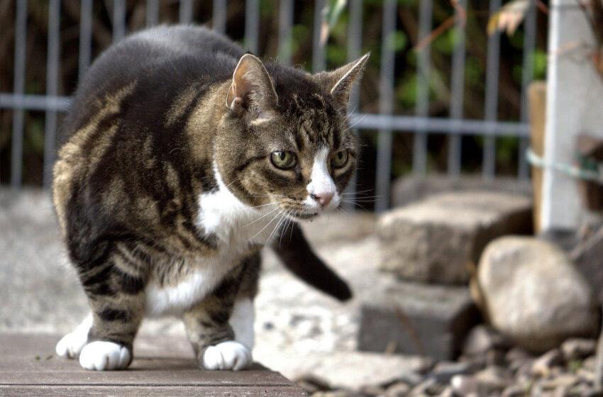 Alergia jako mechanizm obronny kotów
