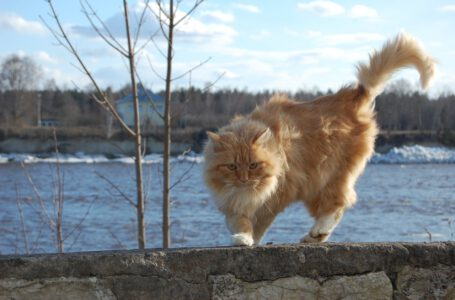 Co oznacza gdy kot macha ogonem?