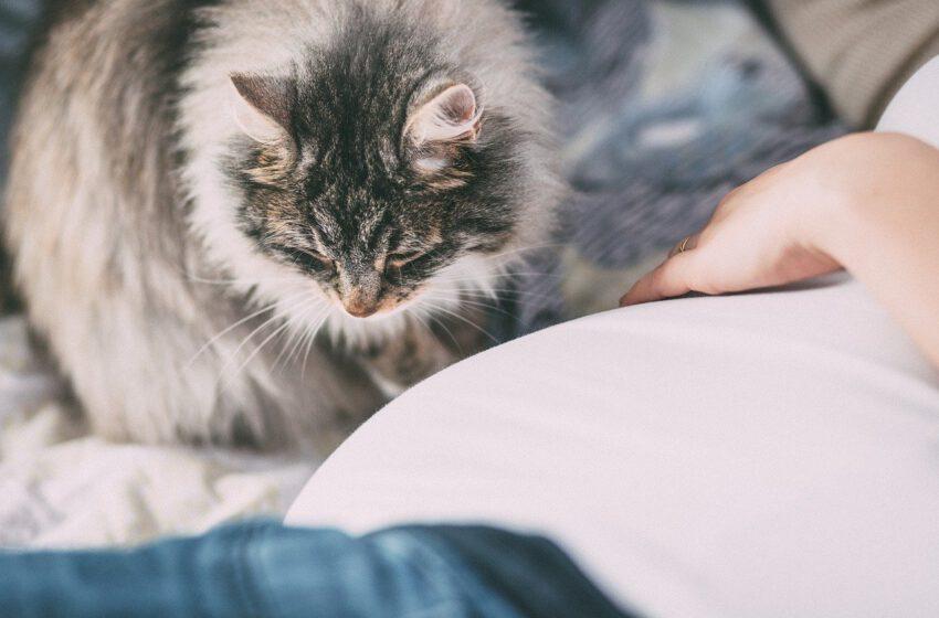 Białko Fel d 1 odpowiada za alergię na koty