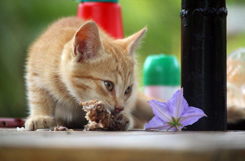 Pani Beata Pawlikowska o jedzeniu dla kotów [wideo]