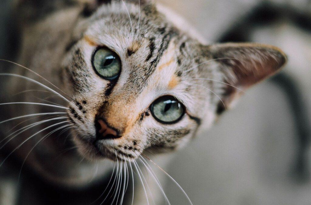 Kotek z miną