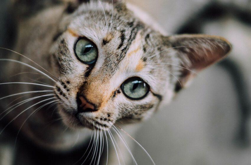 Co mówi mimika buzi kotków?