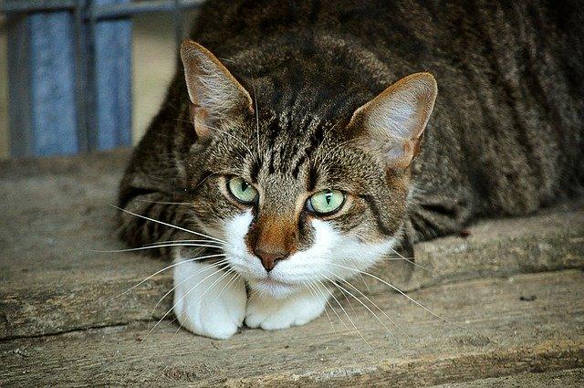 Czy jesteś dla kota rodzicem?