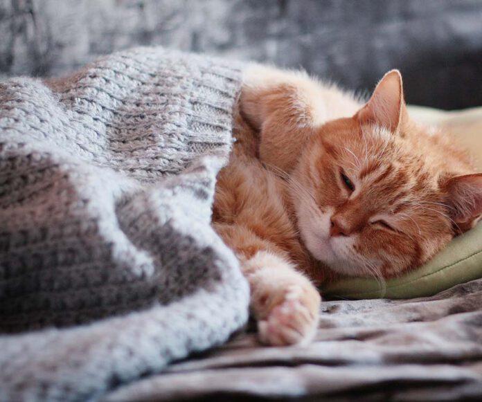 Dlaczego kot sika na łóżko?