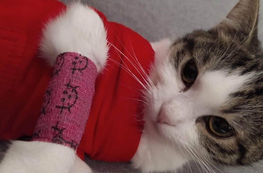Kastracja kota, opis zabiegu i ważne informacje dla opiekunów