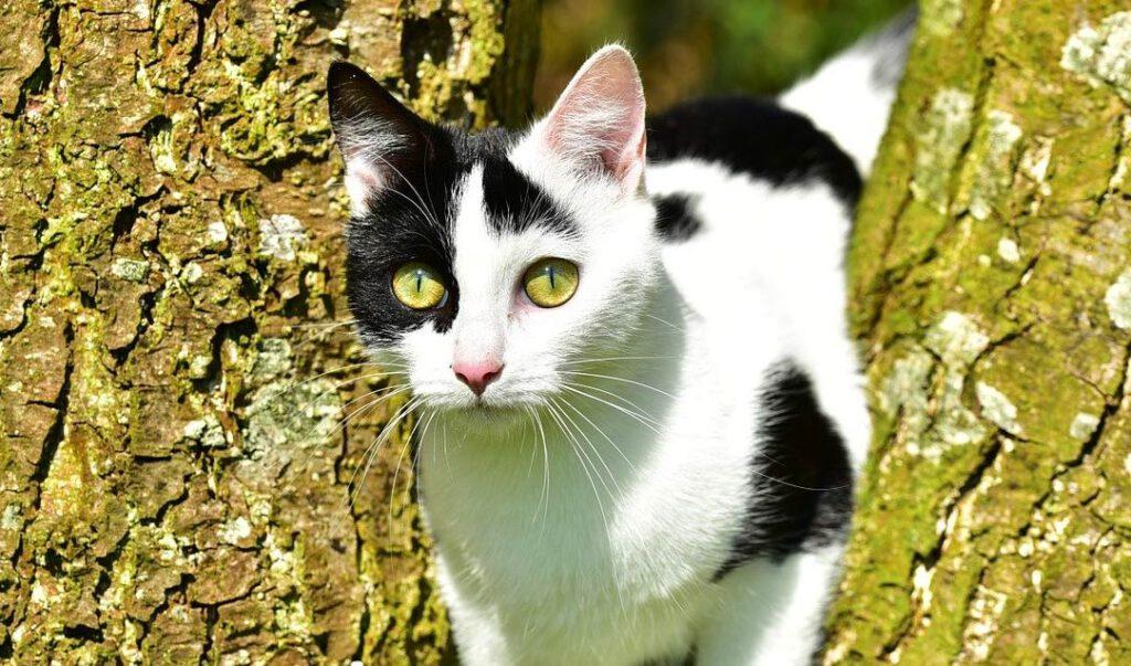 koty wolno żyjące