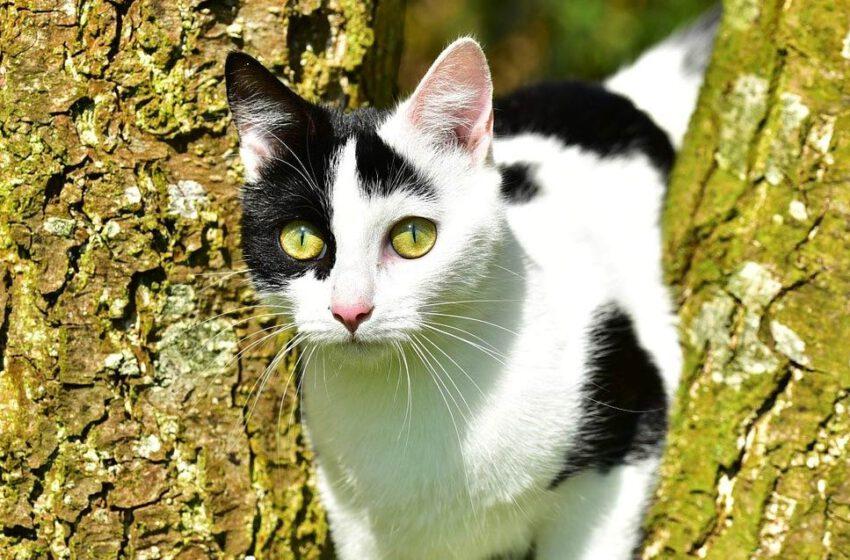 Dlaczego należy kastrować koty wolno żyjące?