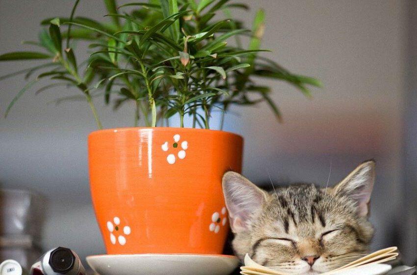 Najpopularniejsze kwiaty domowe trujące koty