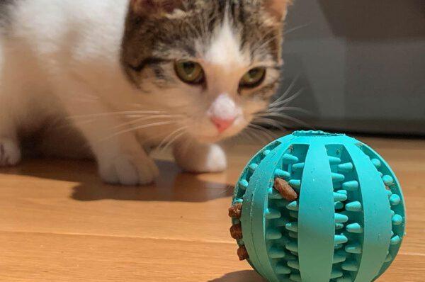 zabawa kota z piłeczką
