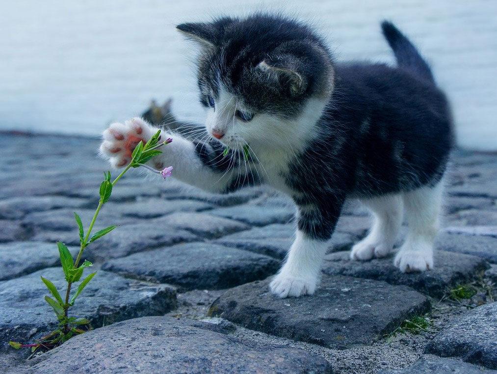 Zabawne zdjęcia i filmiki z kotkami, badania naukowe