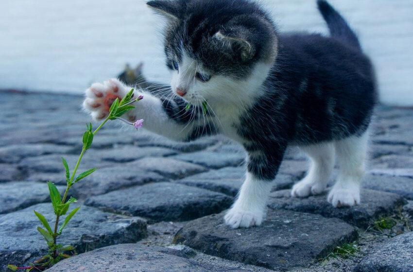 Oglądanie kotów w internecie to zdrowie